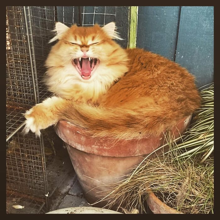 Possibly Yawning, Possibly Laughing At The Squished Plants