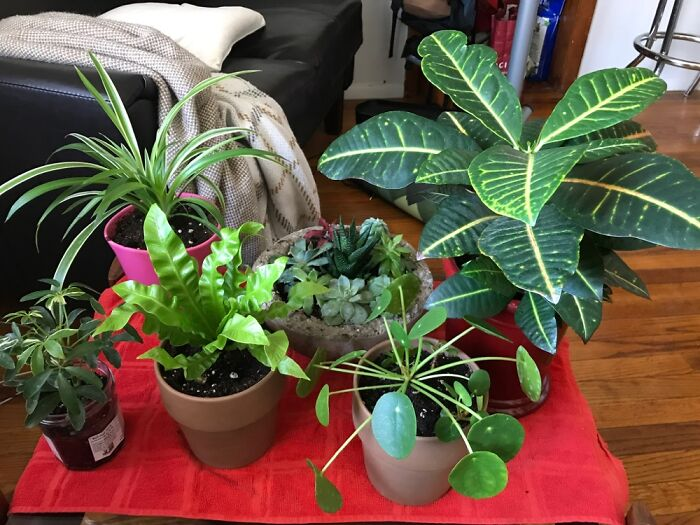 Mid-Pandemic Plants Doing Their Best To Cheer Me Up Everyday