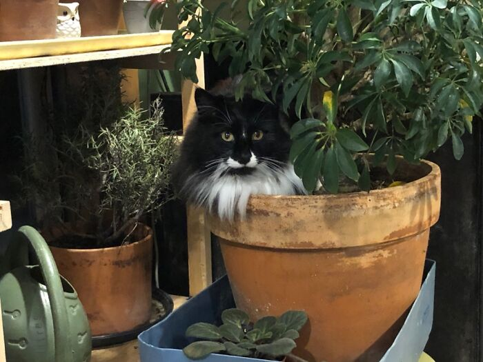 Kylo, Just Hanging With A Plant.