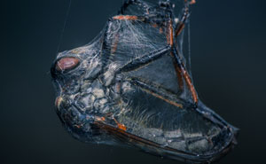 Here Are My 23 Best Shots That I've Made With My Former Macro Lens