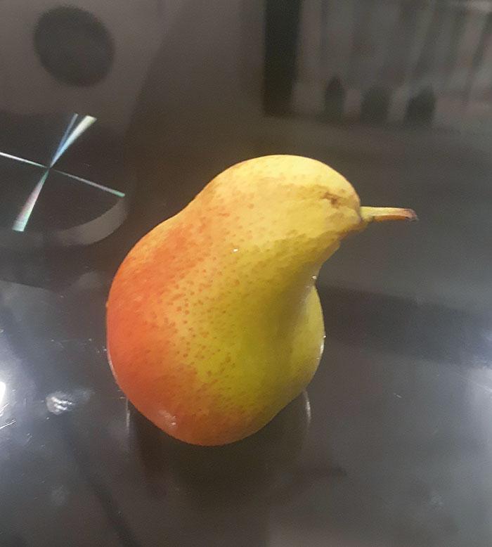 Pear That Looks Like A Kiwi (Bird)