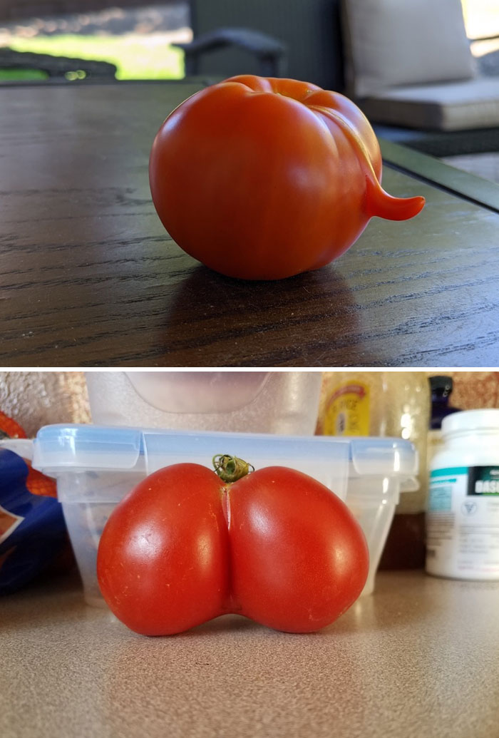Tomato My Wife Grew vs. One Our Friends Bought
