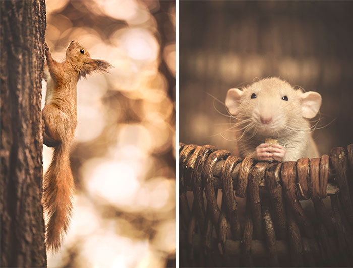 I Photograph Animals In Shades Of Brown (20 Pics)