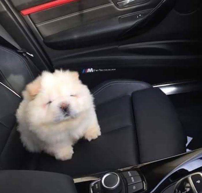Alguien dejó un puré de patatas en el coche
