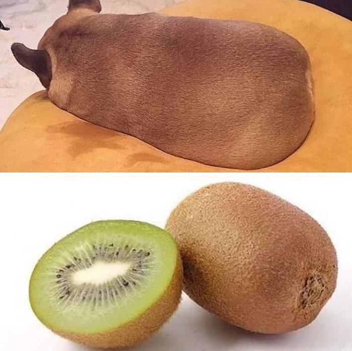 Este kiwi tiene un aspecto extraño