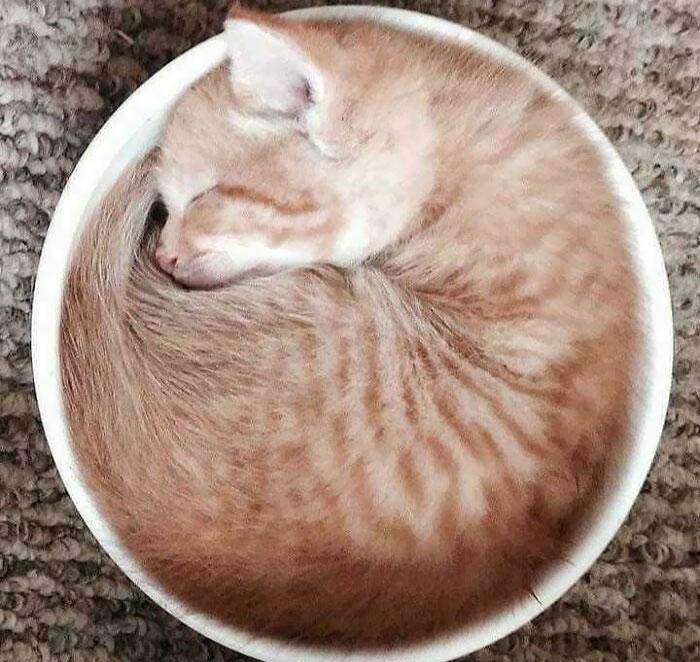 ¿Te gustaría una taza de café con leche?