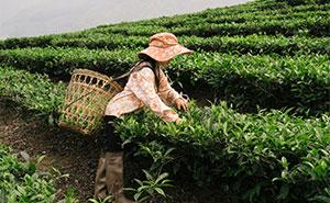 30 Beautiful Photographs Of Vietnam By Dima Gilitukha