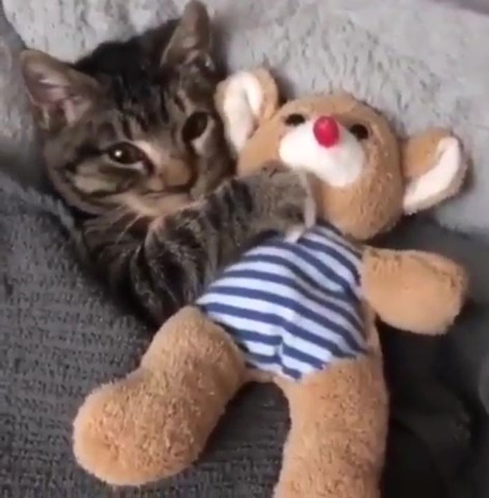 Kitty Getting Tucked In With Its Favorite Toy