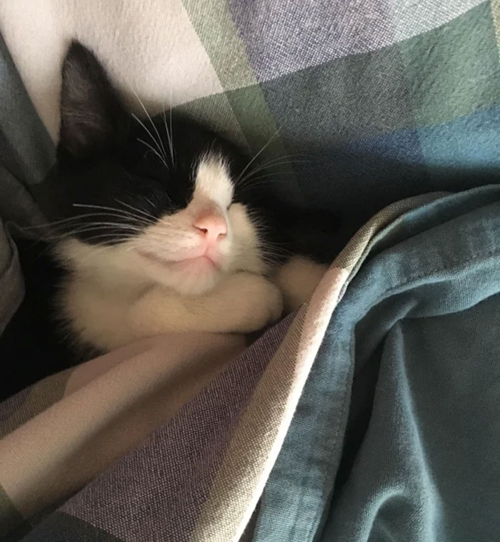 I Got A Kitten, He Came Home Ate Some Food Then Passed Out :D
