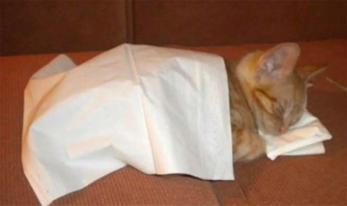 I'll Never Get Tired Of Seeing This Kitten Sleeping On Kleenex