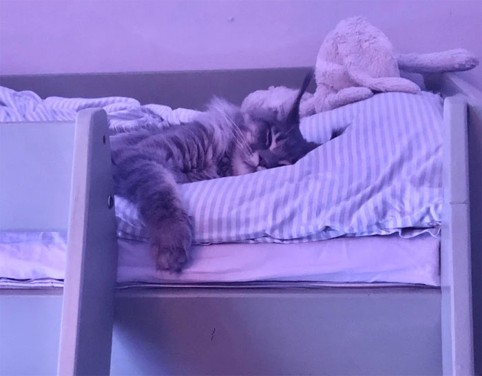 I Went To Tuck In My Daughter Only To Find This Kittycatcat Had Already Taken Her Place And Gone To Bed