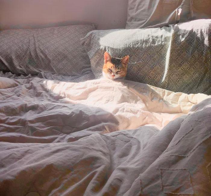 It's Tuna's Day Off. Please Do Not Disturb