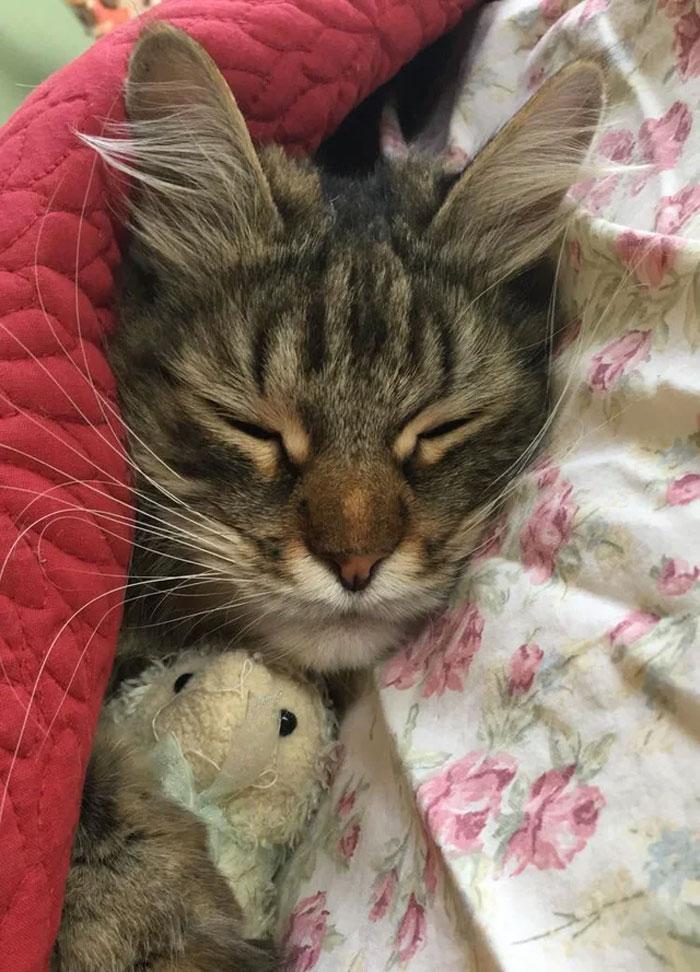 He Sleep, He Peep, And He Hug He Tiny Sheep