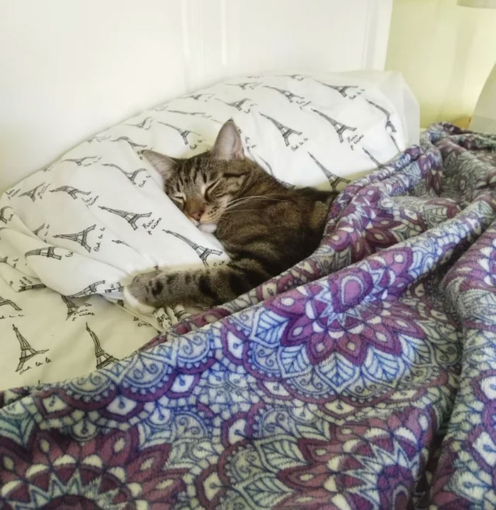 Tuna Sleeps Like A Hooman