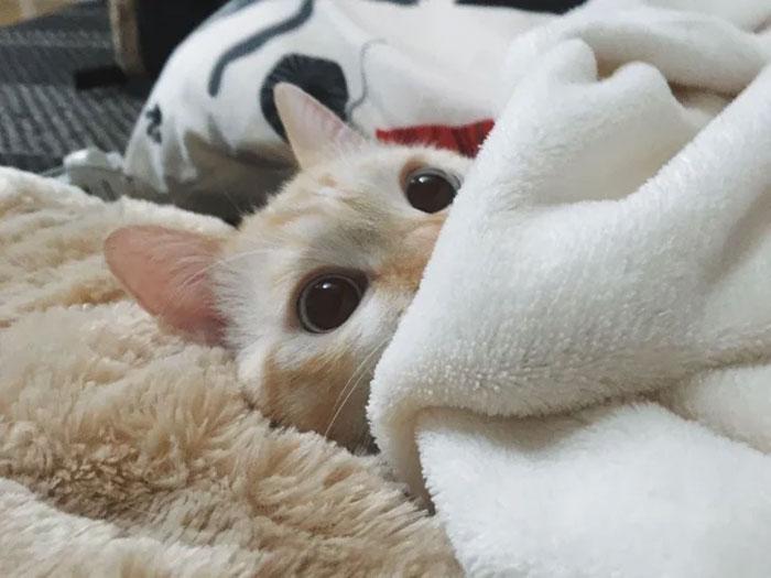 Cat Ready To Sleep. Goodnight Reddit