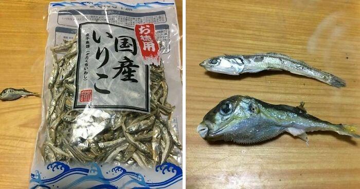 El (muy) venenoso pez Fugu, ¡ahora gratis con sus anchoas secas!