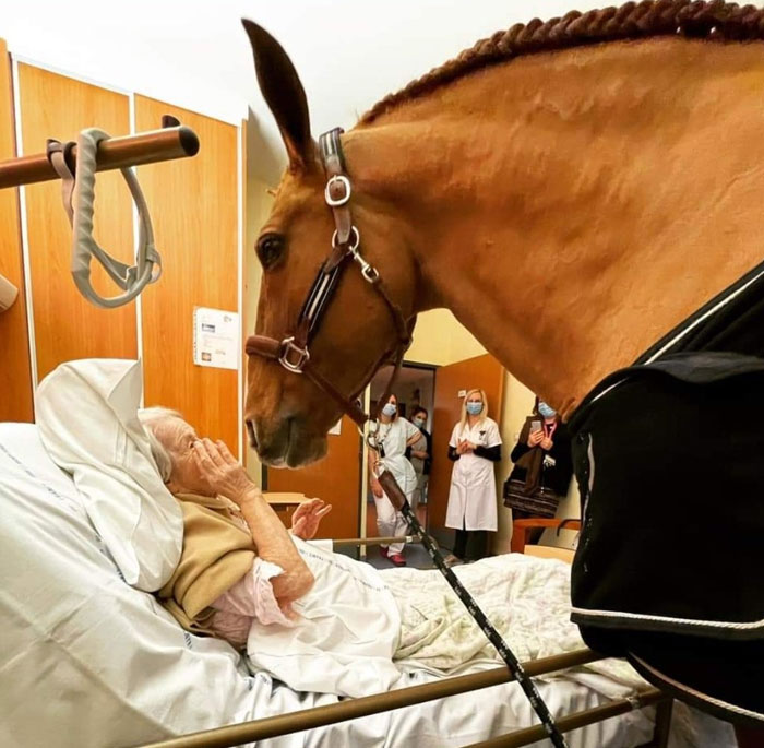 In France, Peyo, A Beautiful 15-Year-Old Stallion, Often Comes To Comfort And Soothe Terminally Ill Patients At The Techer Hospital In Calais