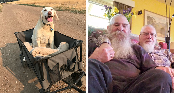 If You're Feeling Down, These 50 Wholesome Posts Might Lift You Up (New Pics)