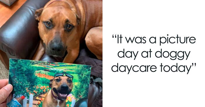 If You're Feeling Down, These 105 Wholesome Posts Might Lift You Up (New Pics)
