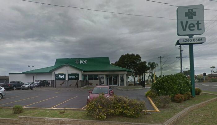 Vet In Nsw, Australia