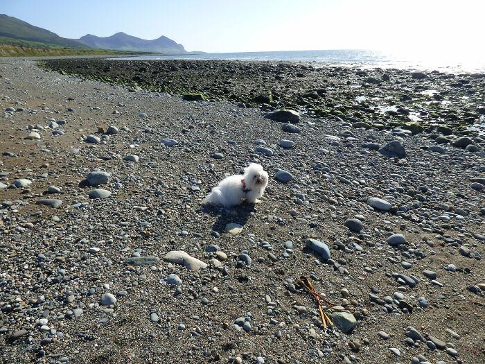 My Furball Pup At The Beach!