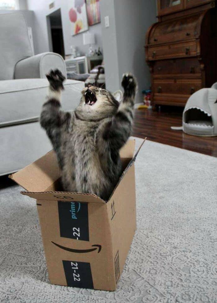 El guardián de la caja