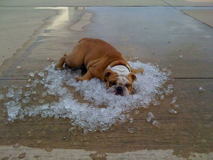 You Know It Is Hot When