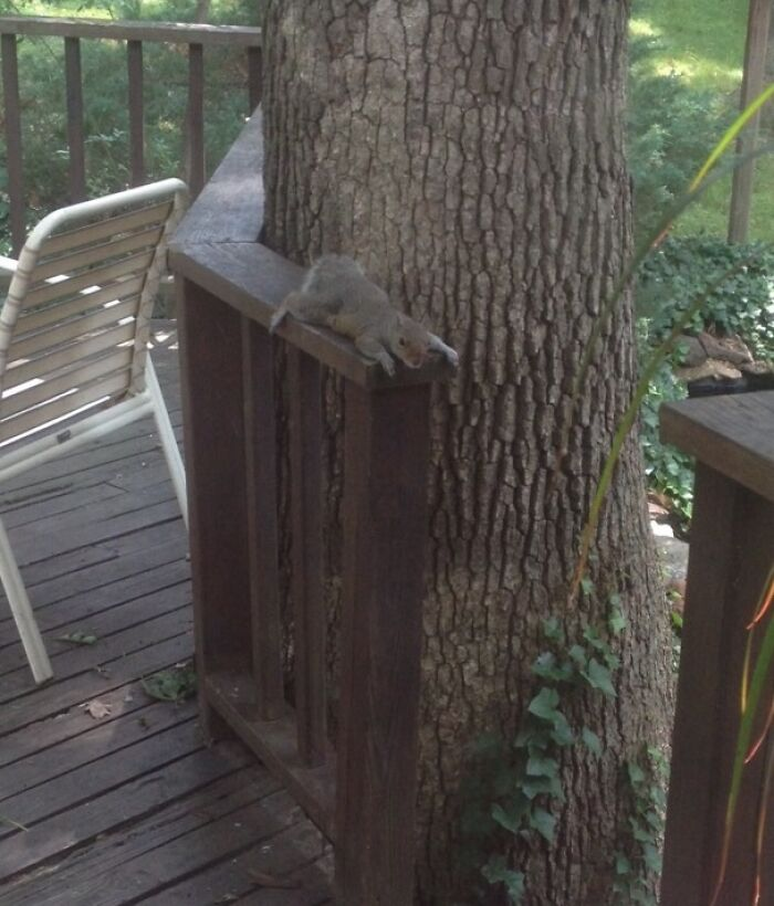 When It's So Hot Out, You Need To Take A Break From Doing Your Squirrel Things