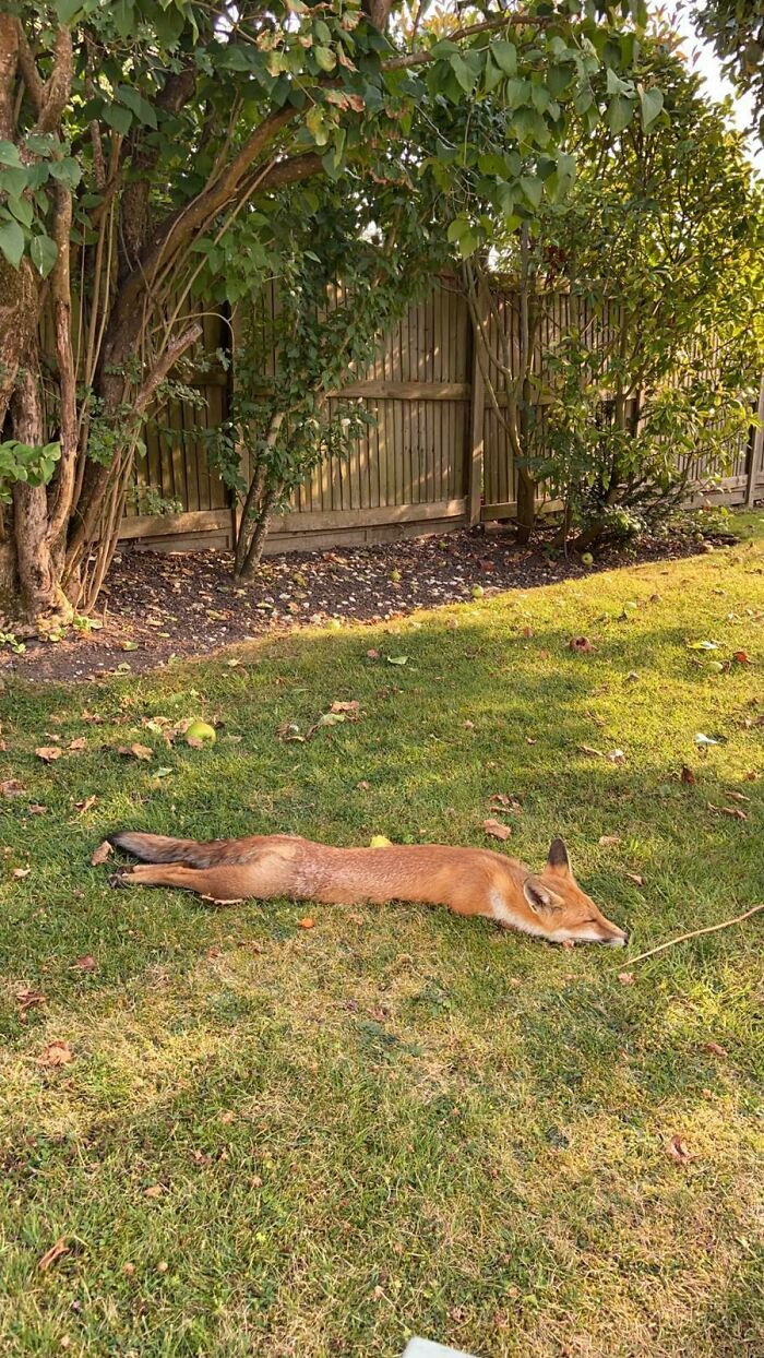 Too Hot For The Fox In London Today