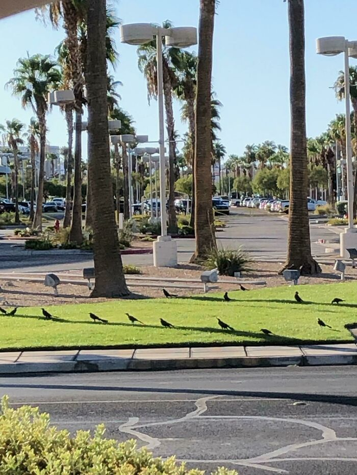 These Birds Making Use Of Limited Shade On A Hot Day