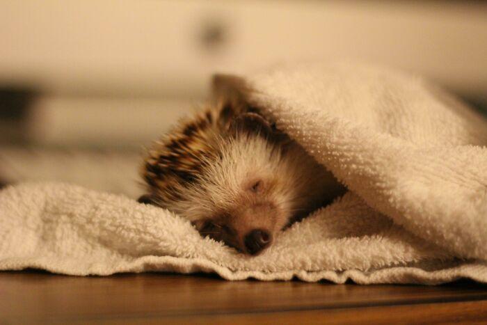 This Is Caspar Sleeping After A Nice Bath