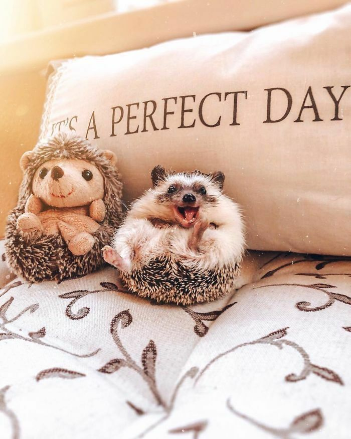 Happy Hedgehog With His Best Friend