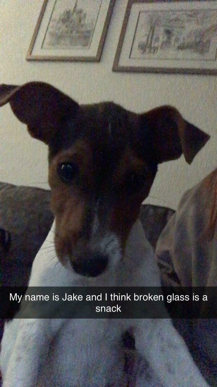 Puppies Be Dumb