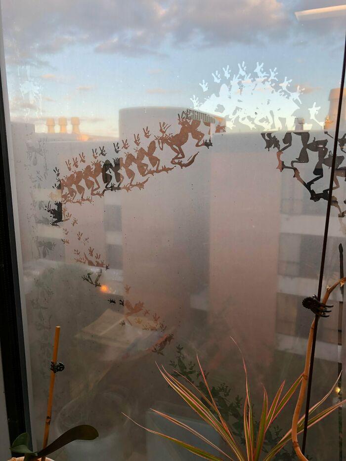 Marcas de rana en una ventana