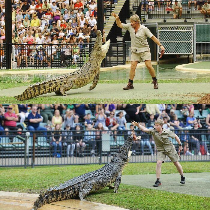 Steve And Robert Irwin Feeding The Same Crocodile 15 Years Apart