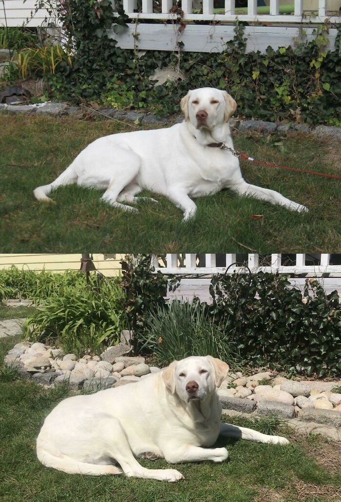 My Dog, In The Same Spot, At 1 Year Old And 11 Years Old.