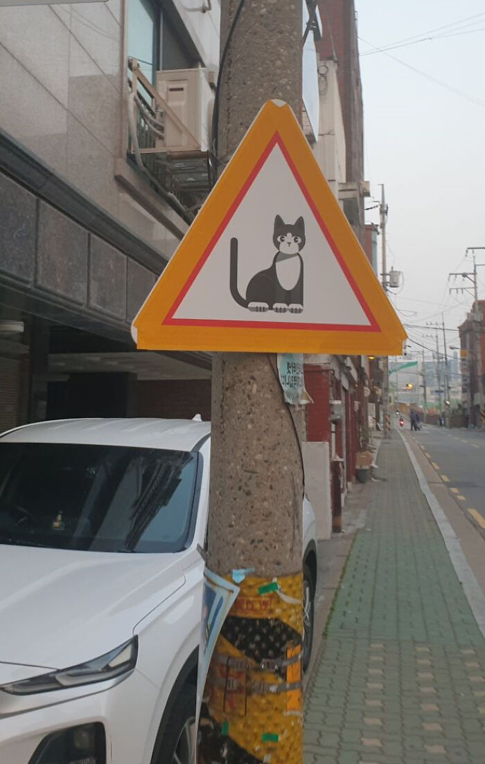 """This Sign Is Not For A Cat Crossing. It Means """"Caution: Cat Is Around"""""""