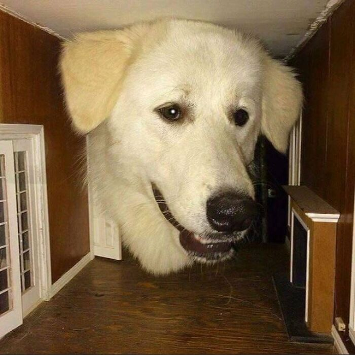 Dog Put His Head Inside A Doll House
