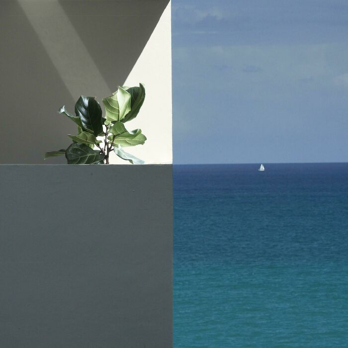 Our Neighbors' Balcony, And Their Ficus Tree Named Ben, Lined Up Perfectly With The Horizon