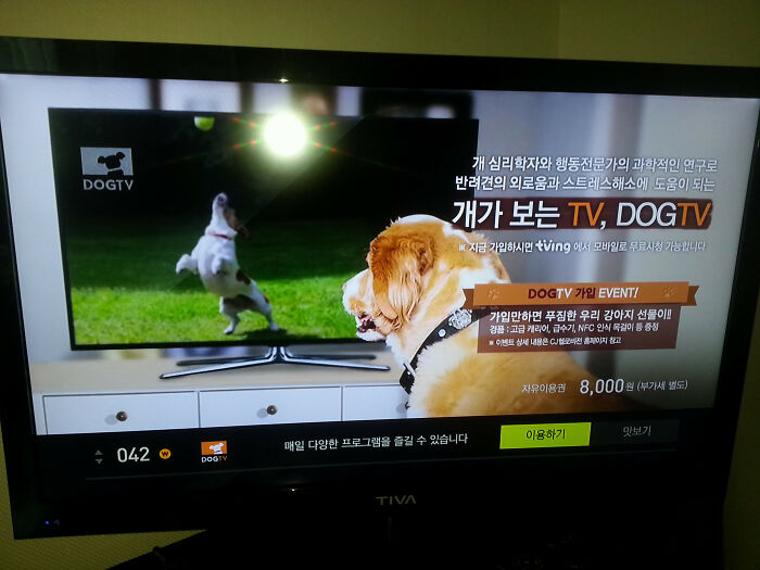 I'm Staying In Korea Right Now And Apparently There Is A TV Channel Dedicated To Dogs, As In Programming For Dogs