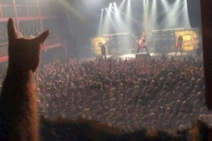 Cat Enjoying A Rock Concert