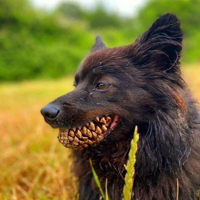 Sharp Teeth Boy