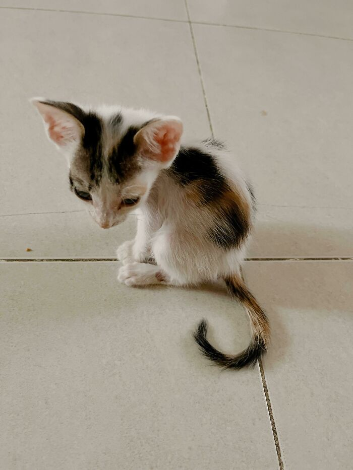 My Newly Adopted Kitten. Meet Misa!