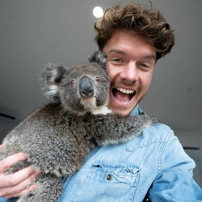 This Little Koala Named Ralph Has A Second Chance