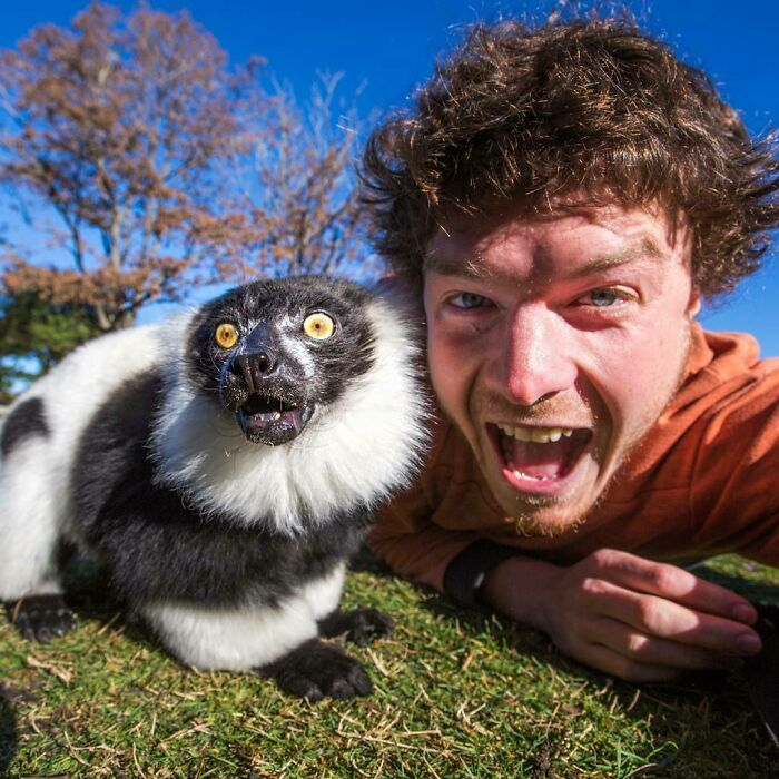 I Told The Lemur That He Only Got 10 Likes On His Last Photo. Lets Cheer Him Up This Time