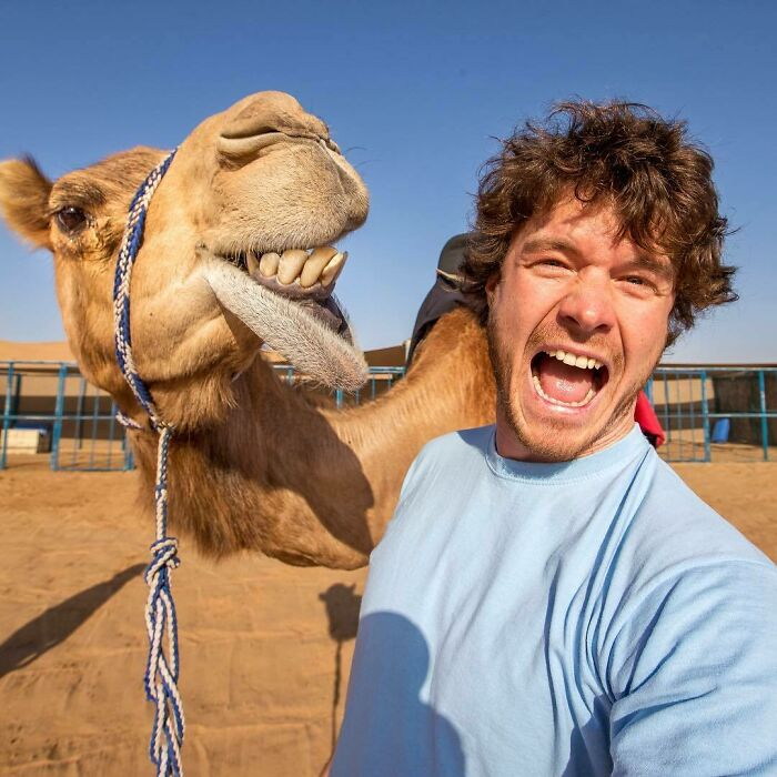 When A Camel Is More Photogenic Than You! Meeting The Locals Of Visit. Dubai