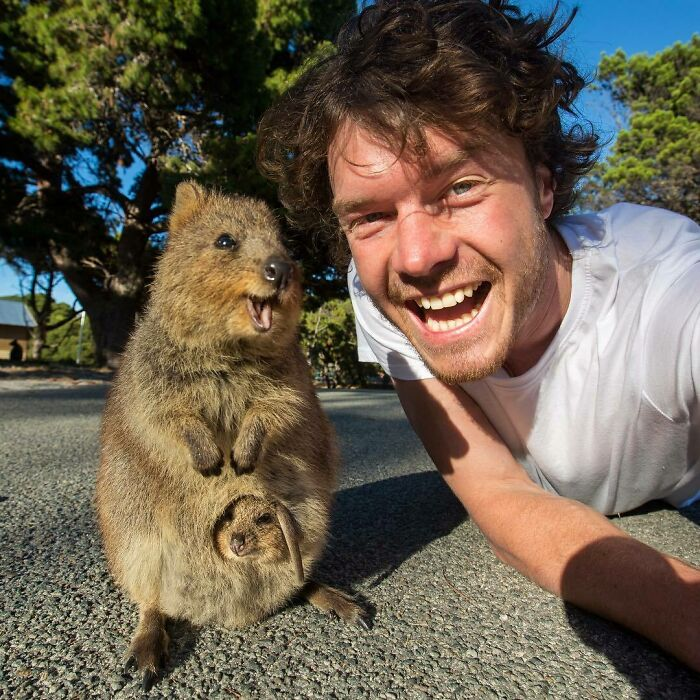 It's Smile Time! Heads Up For Hardcore Quokka Enthusiasts