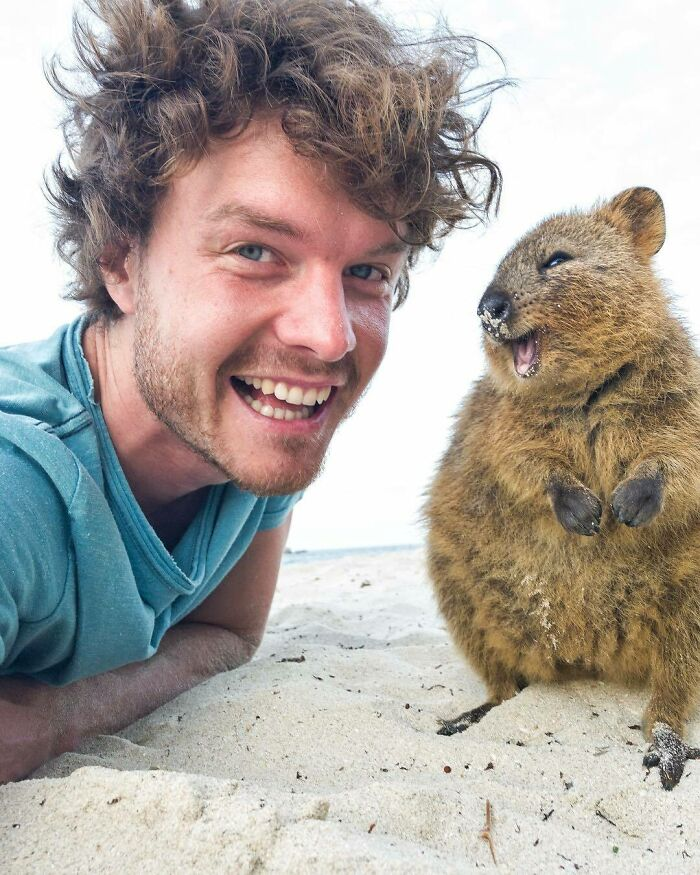 I'm So Grateful That These Quokkas Have Single Handily Changed The World Emotionally. Helped Launch My Career, Making People Smile And Now Indirectly Helping The Welfare Of Other Animals