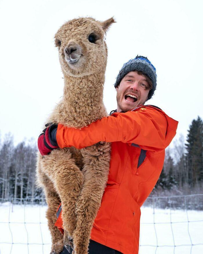Hug A Happy Cloud: Bucket List. You Can Volunteer On Alpaca Farms All Over The World