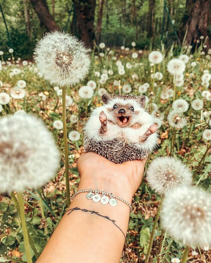 How Many Dandelions Can You Count? That's How Many Wishes You Have